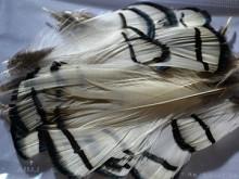 Перья фазана